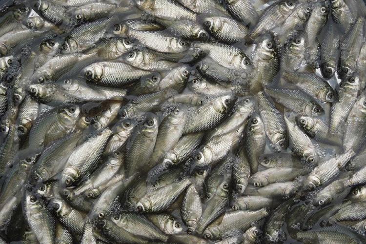 鱼养殖基地