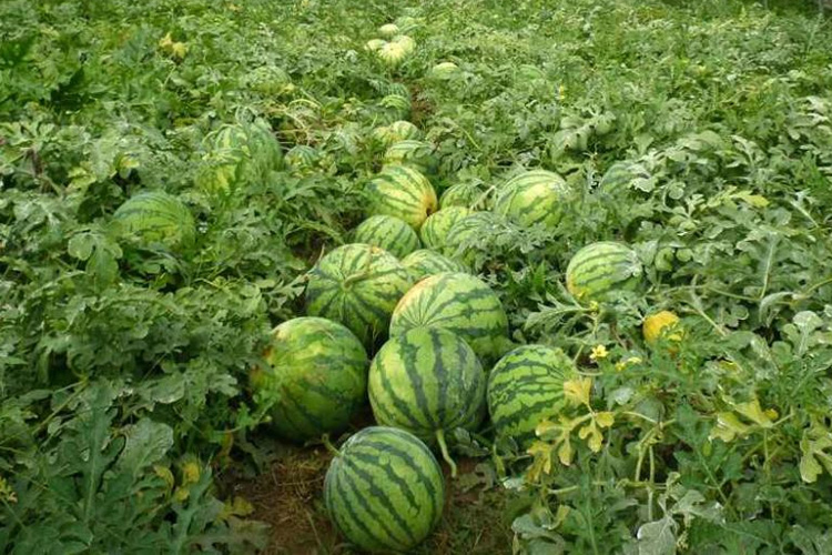深圳蔬菜配送物流的特点以及服务流程